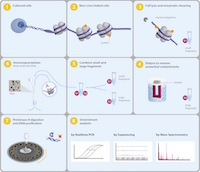 Chromatin Immunoprecipitation Sequencing