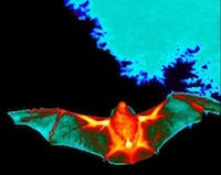 thermal bat
